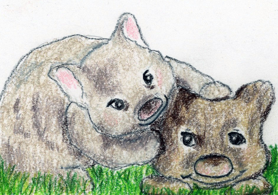 Wacky Wombats: a calming short story for children