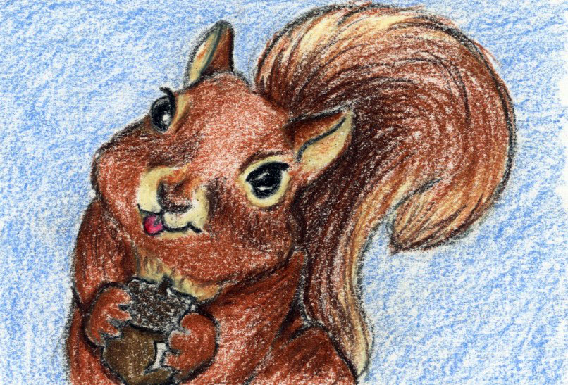 Silly Squirrels: a story and guided meditation for kids