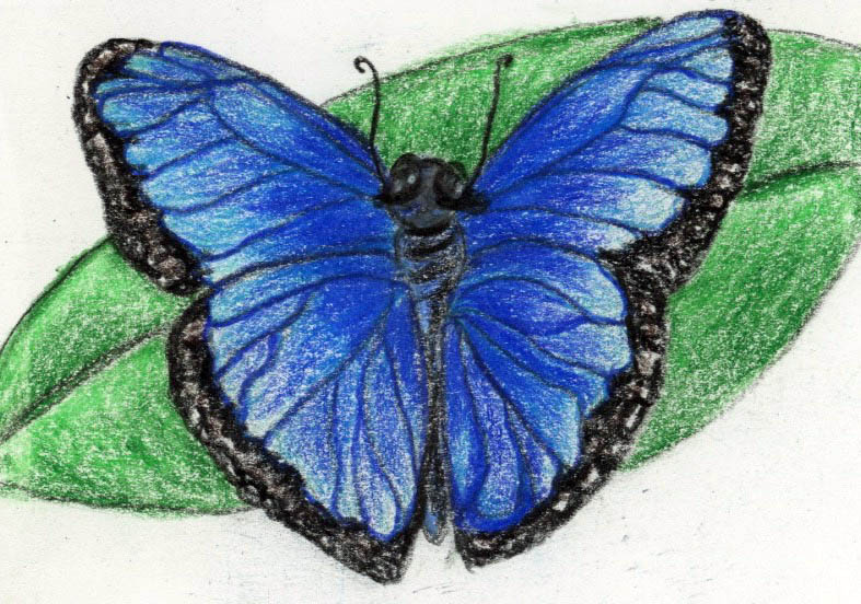 Beautiful Butterfly: acalming bedtime and nap time story
