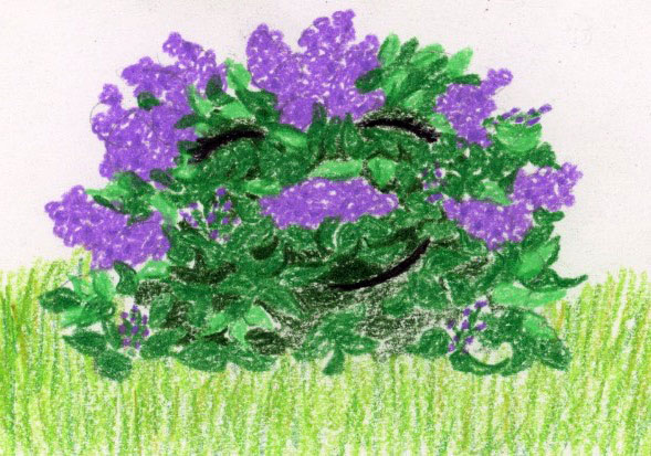 Spring Flowers: bedtime story and guided meditation for kids
