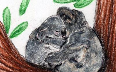 Curious Koalas: a calming meditation and mindful bedtime story