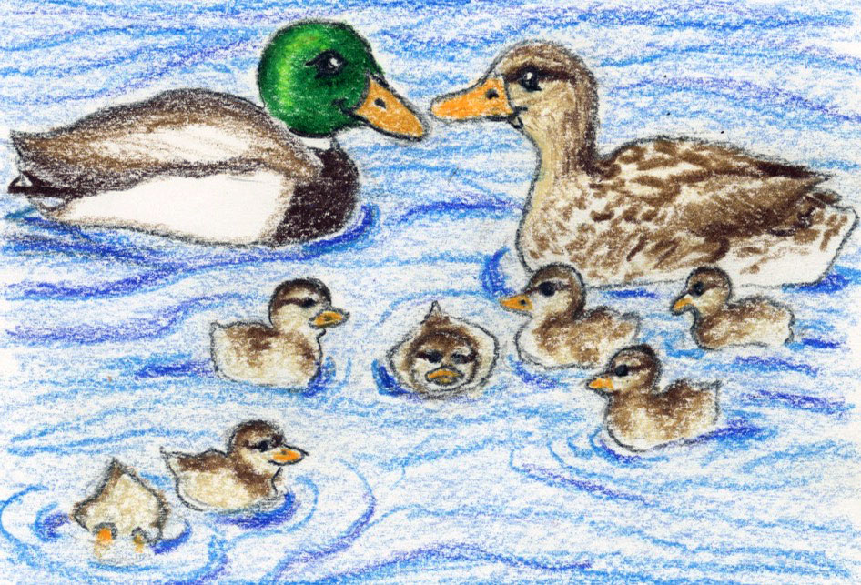 Baby Duck Parade: mindfulness and story for your bedtime routine