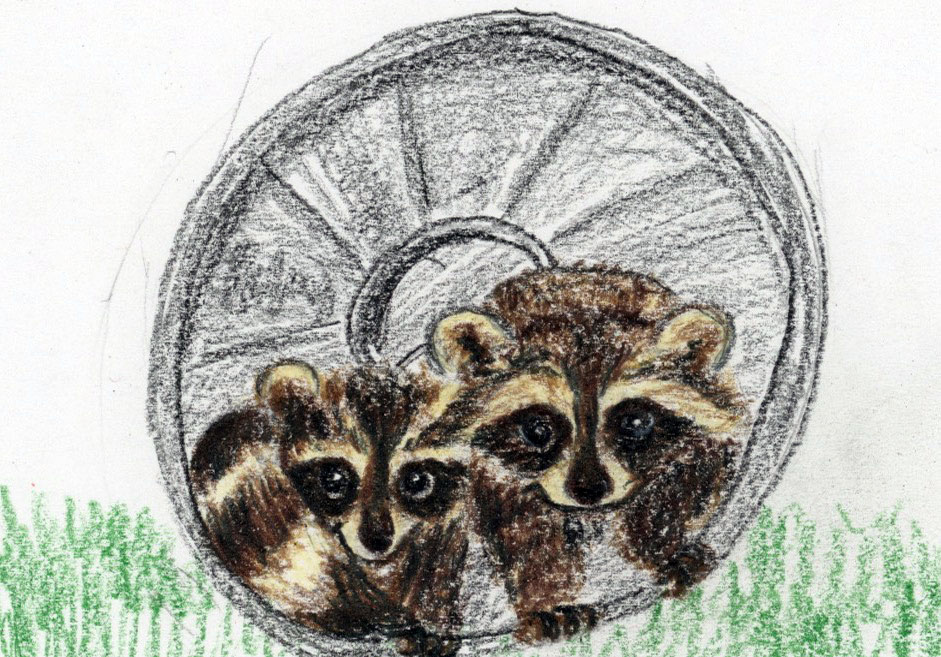 Rolling Raccoons: a child's mindful story and relaxation