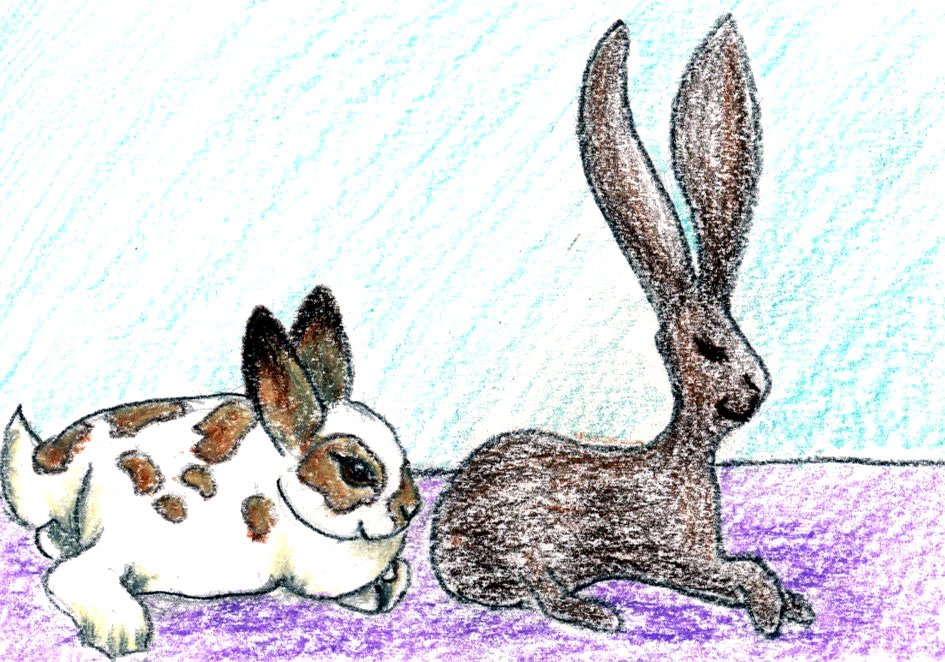 Bunny Playground: a bedtime meditation and story