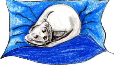 530. Ferret Fun: a calming bedtime story for children